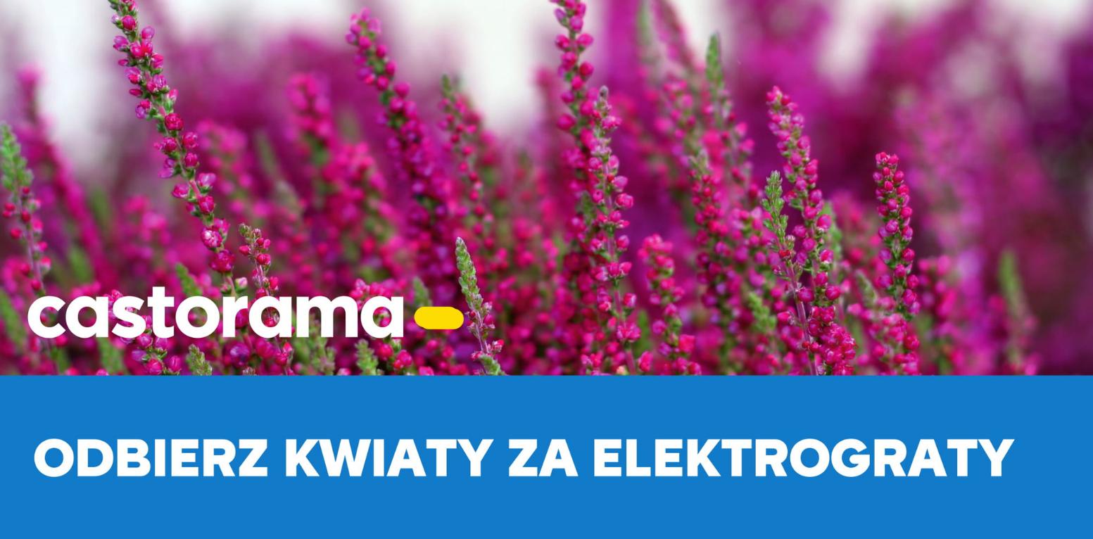 Przed Nami Kolejna Edycja Akcji Kwiaty Za Elektrograty W Castoramie Portal Publicrelations Pl